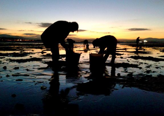 Mariscadoras recogiendo almejas en las Rías Baixas. Once años después de la catástrofe del Prestige