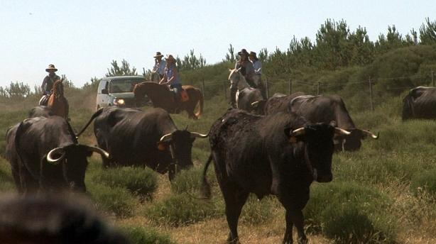 Acompañamos a 400 vacas en su camino trashumante